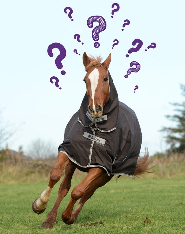 Horse Rug Buying Guide – How to select a rug for your horse:
