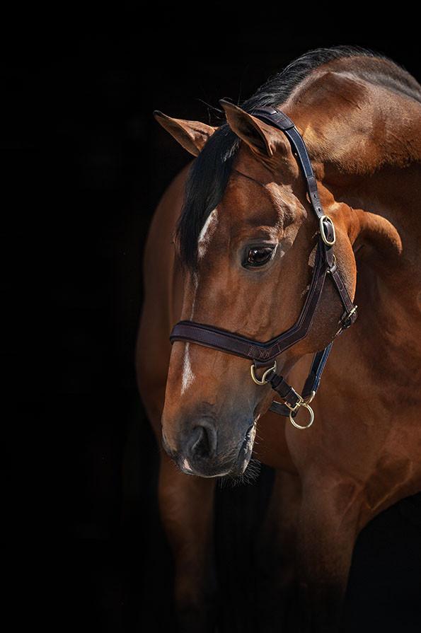 Horseware Rambo Micklem Headcollar - Brown