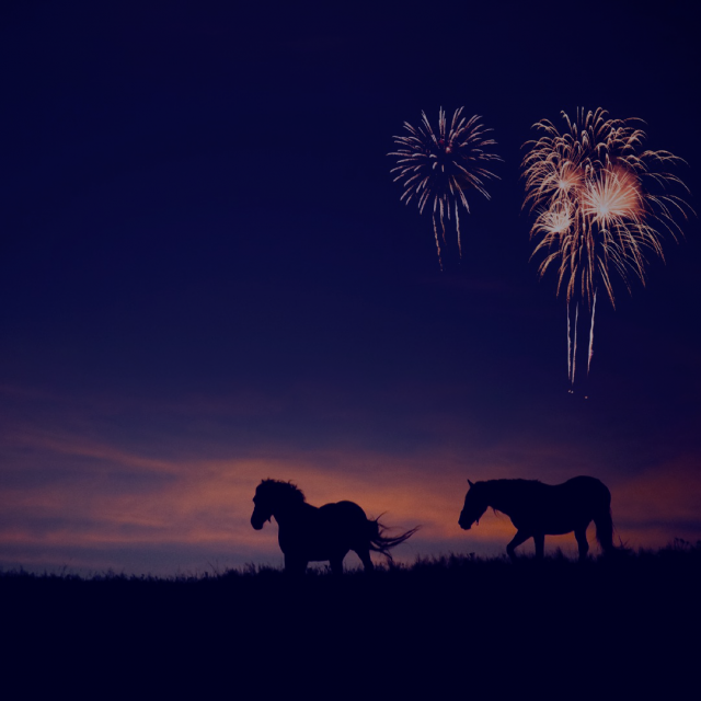 How to look after your pets this Firework Season