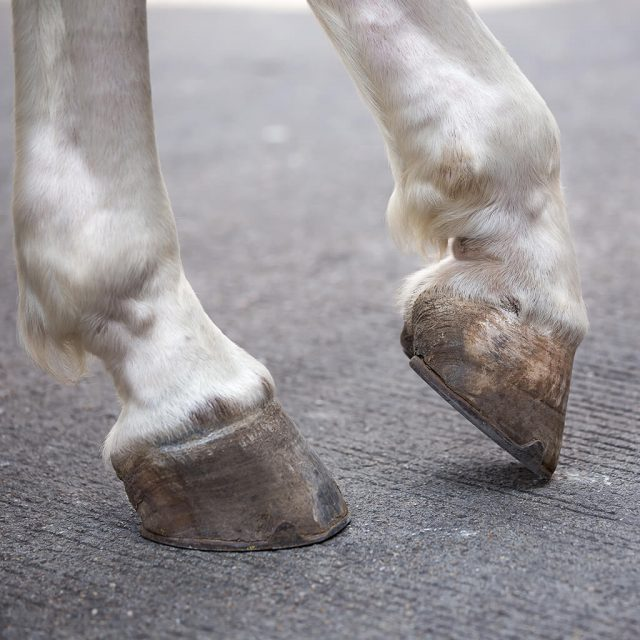 Top tips for looking after your horse's hooves.