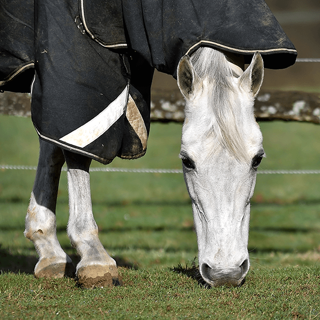 Do you know the different types of horse rugs?