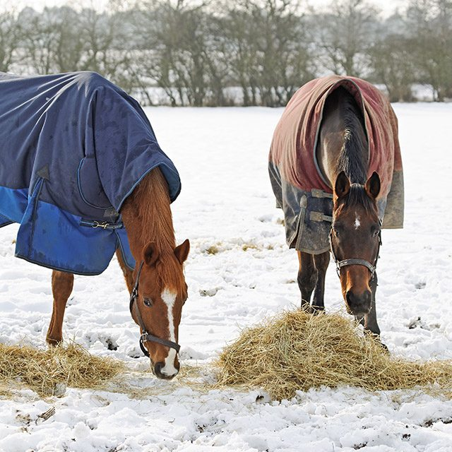 Feeding your horse over winter