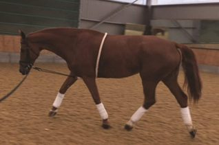 image of Mark Todd Lunging Aid