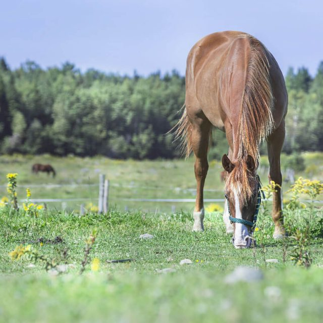 Identifying which plants are poisonous to your horse