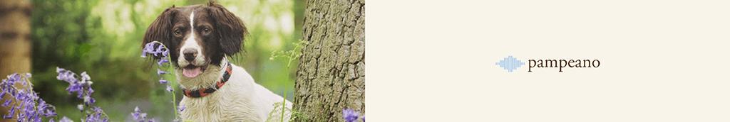 Pampeano category image