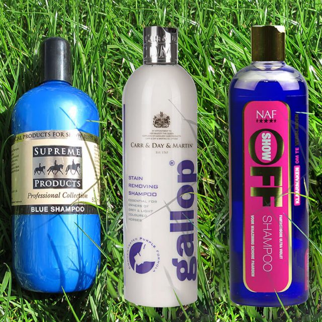 Review of horse shampoos