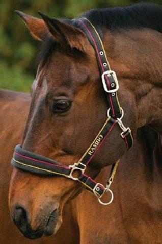 image of Horseware Rambo Padded Headcollar